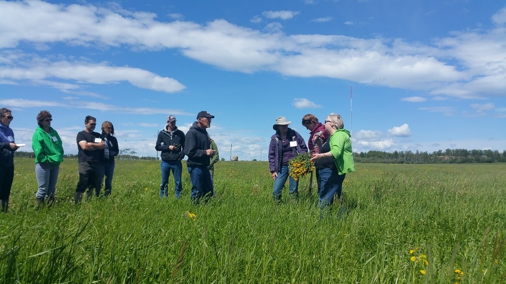 Peace River Forage Association Spring Tour and Info Session,